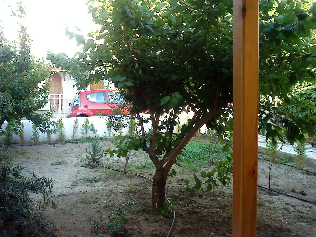 Arka Bahçe